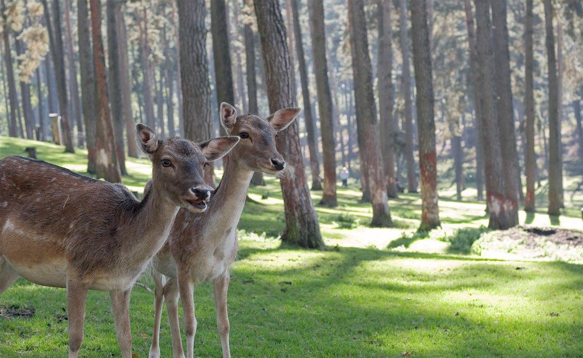 Blessed Deer